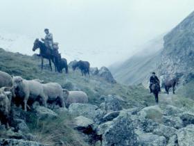 Kavkazští pastevci